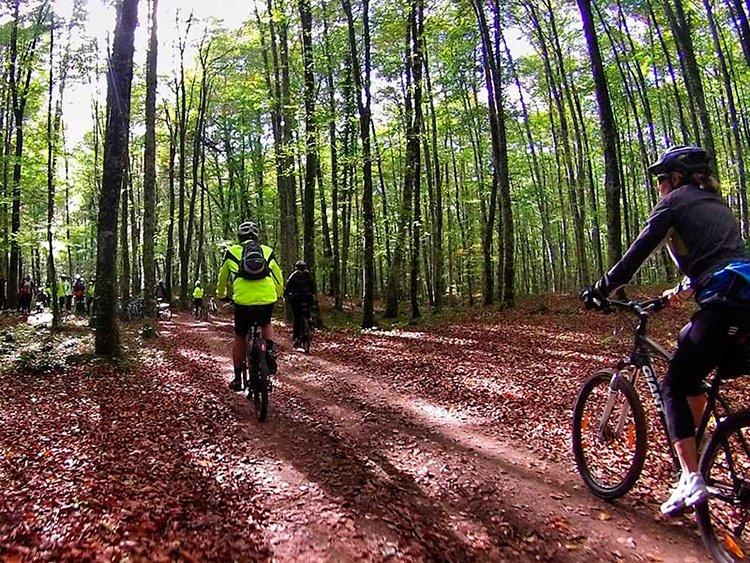 bici-bosque-Fageda-d-en-Jorda